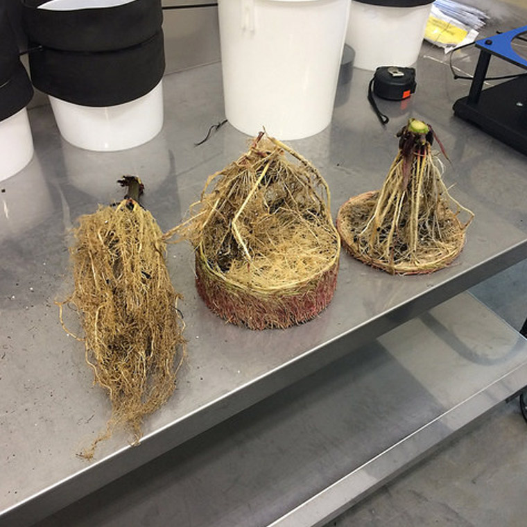 Root Samples on lab counter